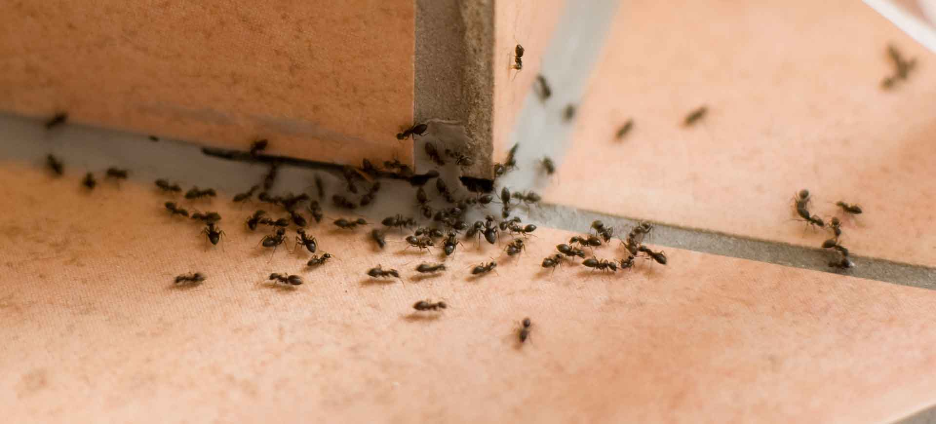 ant pest control lakeside