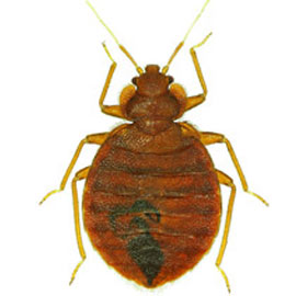bed bug treatment Lakeside ca