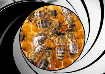 bee pest control treatment san diego
