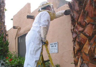 bee hive removal san diego