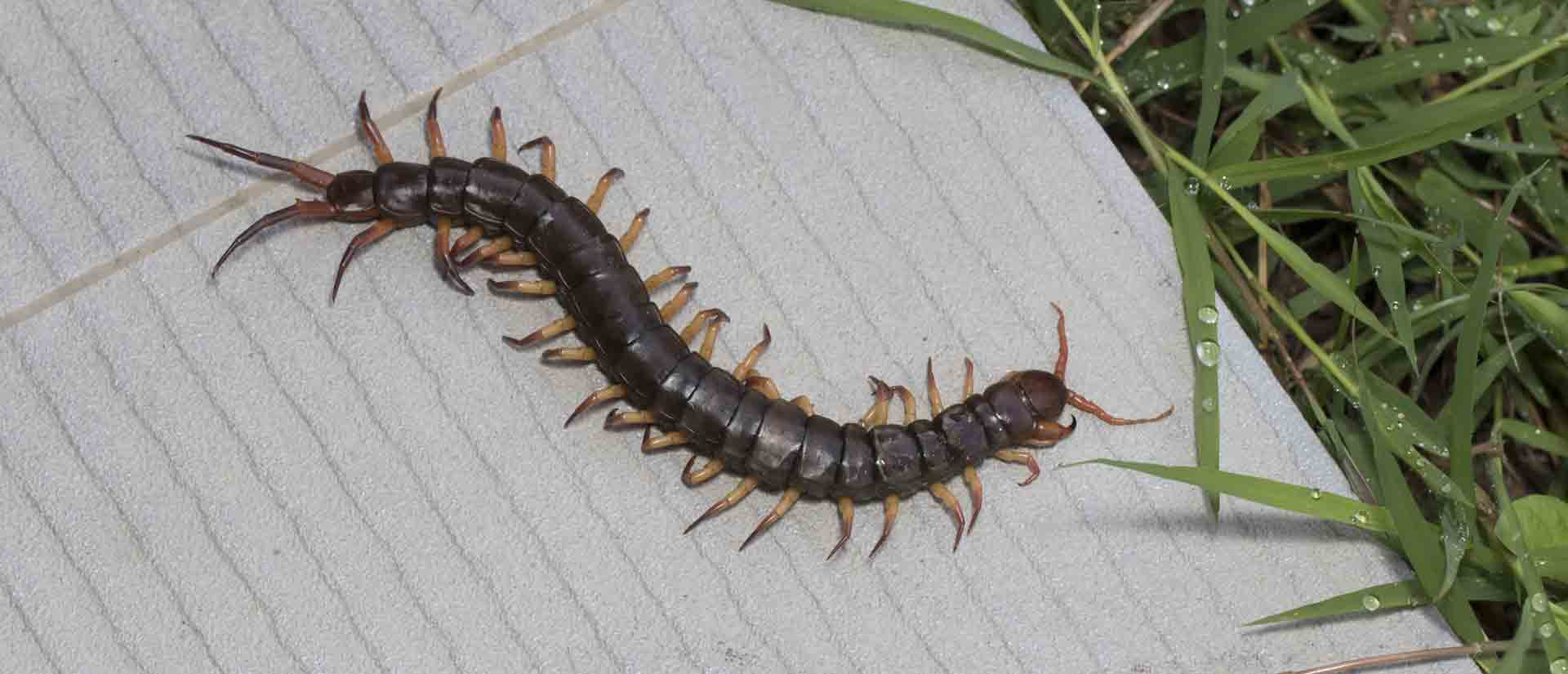 centipede pest control mission valley