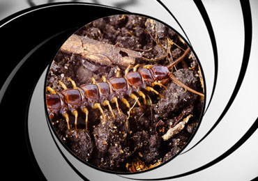 centipede pest control treatment san diego