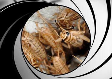 cricket pest control treatment san diego