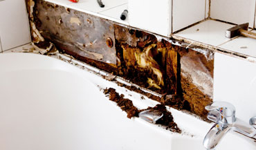 fungus dryrot treatment san diego
