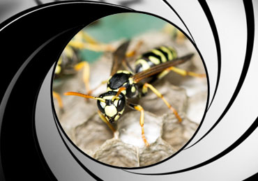 wasp pest control treatment san diego